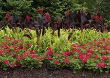 Lit de fleur à Dallas Arboretum et au jardin botanique photographie stock libre de droits