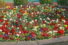 Lit de fleur augmenté Images stock