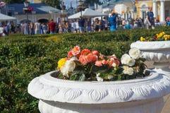 Lit de fleur avec des fleurs dans la place KOSTROMA, RUSSIE de Susanin - 22 juin 2017 Photographie stock