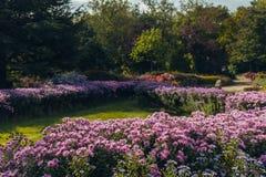 Lit de fleur avec les fleurs colorées lumineuses dans le jardin images libres de droits