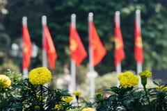 Lit de fleur avec les fleurs jaunes à l'arrière-plan la ville et Photographie stock libre de droits