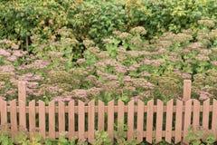 Lit de fleur avec une barrière photo libre de droits