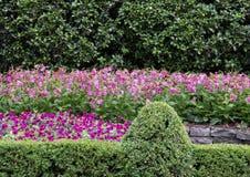 Lit de fleur coloré à Dallas Arboretum et au jardin botanique image libre de droits