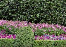 Lit de fleur coloré à Dallas Arboretum et au jardin botanique photos libres de droits