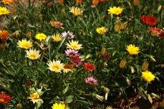 Lit de fleur coloré Photo libre de droits
