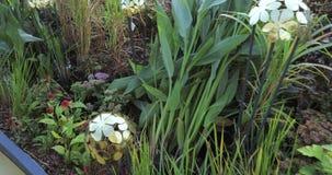 Lit de fleur décoratif avec des hémisphères clips vidéos