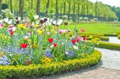Lit de fleur délicieux en parc d'été image libre de droits
