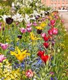 Lit de fleur délicieux en parc d'été photographie stock