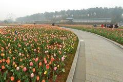 Lit de fleur dans le jardin botanique Image stock
