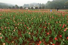 Lit de fleur dans le jardin botanique Images libres de droits