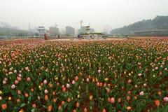 Lit de fleur dans le jardin botanique Photos libres de droits