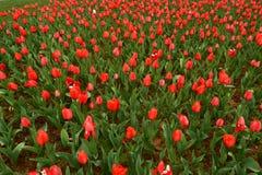 Lit de fleur dans le jardin botanique Photo libre de droits