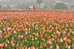 Lit de fleur dans le jardin botanique Images stock