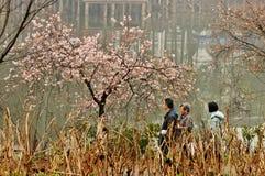 Lit de fleur dans le jardin botanique Photographie stock libre de droits
