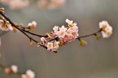 Lit de fleur dans le jardin botanique Photos stock