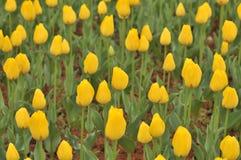 Lit de fleur dans le jardin botanique Image libre de droits