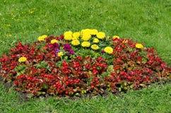 Lit de fleur dans le jardin d'été Photographie stock libre de droits
