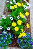 Lit de fleur de couleur au centre de la ville de Philadelphie Photo libre de droits