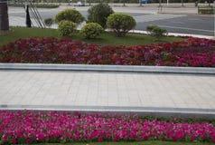 Lit de fleur gentil de ressort sur la ville de Nanning de streetside images libres de droits