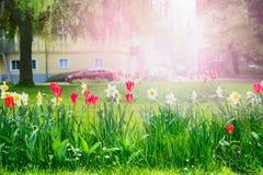 Lit de fleur urbain avec les fleurs rouges et jaunes sur un fond brouillé le paysage et les bâtiments urbains Photographie stock