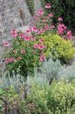 Lit de jardin d'herbes image stock