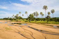 Lit de la rivière de Ruaha Photographie stock libre de droits
