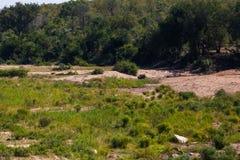 Lit de la rivière sud-africain Image libre de droits