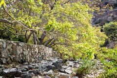 Lit de la rivière Wadi Bani Habib Photos stock