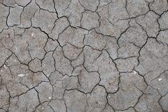 Lit de rivière criqué sec avec des fossiles Images stock