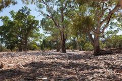 Lit de rivière sec. Chaînes de Flinders (près d'Iga Warta). Australie du sud photos stock