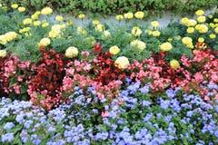 Lit de trois espèces des fleurs d'un regard différent illustration libre de droits