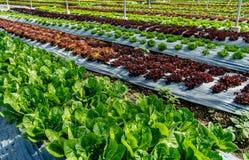Lit des légumes verts Image libre de droits