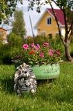 Lit des pétunias sur la pelouse Photographie stock libre de droits