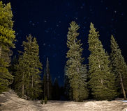 Lit Green Trees at Night with Stars Stock Image
