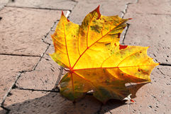 Lit Leaf. On sidewalk in Downtown Boise, Idaho Royalty Free Stock Images