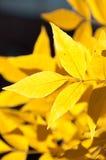 Lit Leaf Stock Photo
