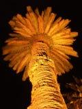 Lit Palm Tree At Night Stock Photos