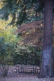 Lit Parkują Ashland, Oregon obraz stock