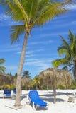 Lit pliant bleu pour prendre un bain de soleil sous un palmier avec des noix de coco Photographie stock libre de droits