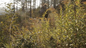Lit by the rays of the setting sun, a middle aged man with a beard with a backpack passing by the camera in a pine stock footage