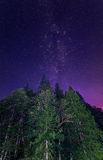 Lit Trees with Milky Way Stock Image