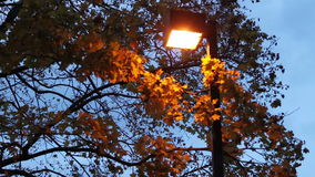 Lit up Lamp Post stock footage