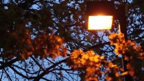 Lit up Lamp Post Autumn Evening stock video footage