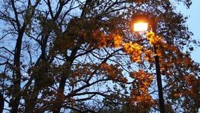 Lit up Lamp Post Autumn Evening stock footage