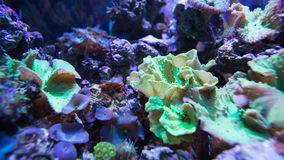 Lit up sea life in tank Stock Photo