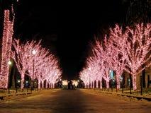 Lit vers le haut des arbres de Noël photographie stock