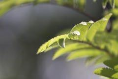 Lit verstoorde groene bladeren Stock Fotografie