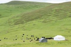 LITANG, CHINA - Jul 18 2014: Grasslands at Litang town. a famous Royalty Free Stock Photos