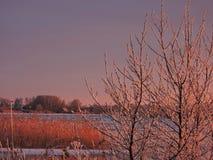 Litauiskt vinterlandskap arkivbilder