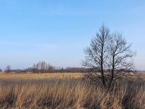 Litauiskt vårlandskap Fotografering för Bildbyråer
